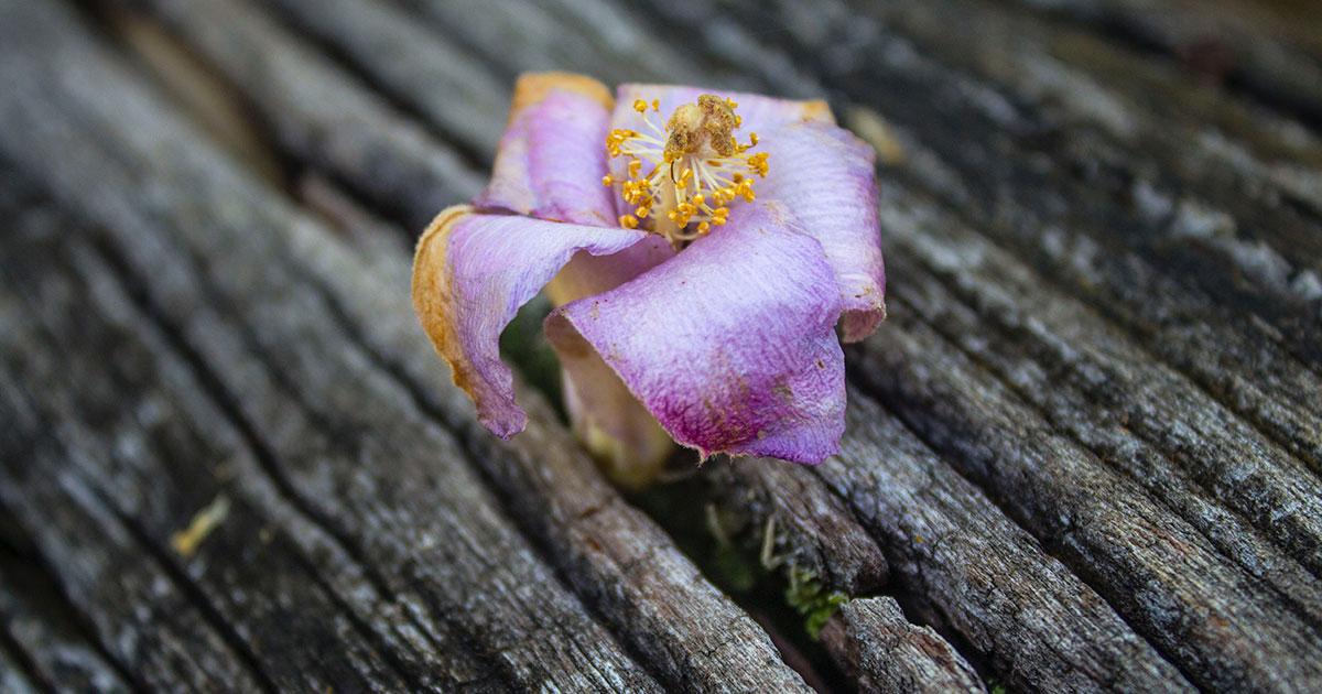 Flower photo by Andy Wangvia via Unsplash