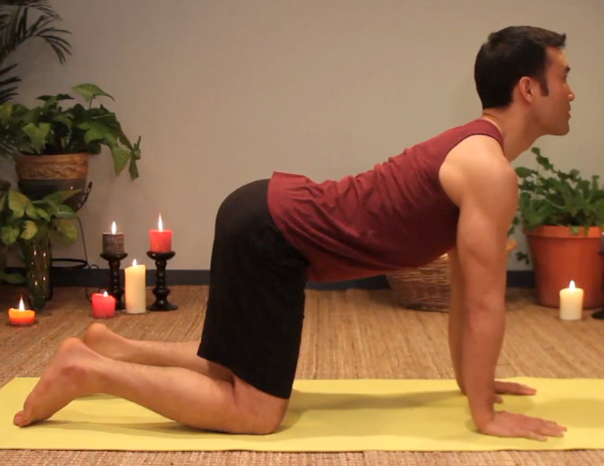 Cow posture of the cat/cow asana