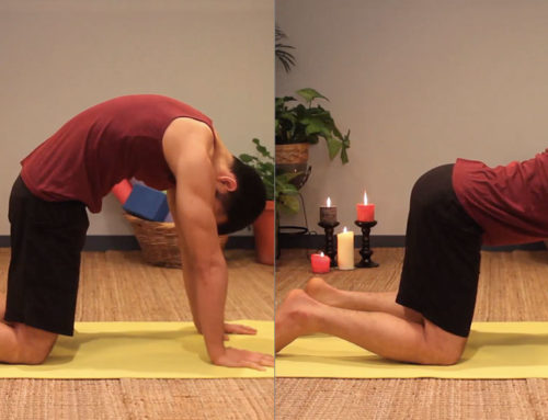 Posture of the Month: Cat/Cow Pose