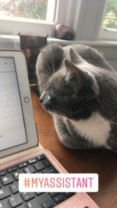 Dustienne's cat, Leo